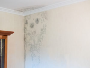 Humidity causes mold and mildew
