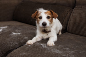 Pet hair can impact a home's air quality